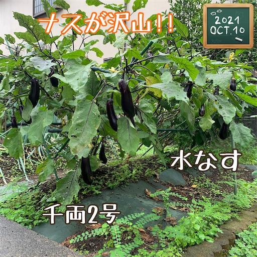 f:id:morinobanana:20211013160109j:image