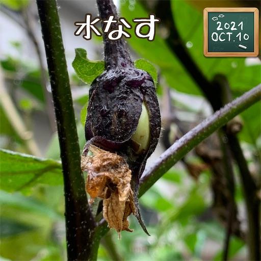 f:id:morinobanana:20211013160149j:image