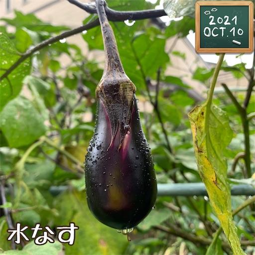 f:id:morinobanana:20211013160152j:image