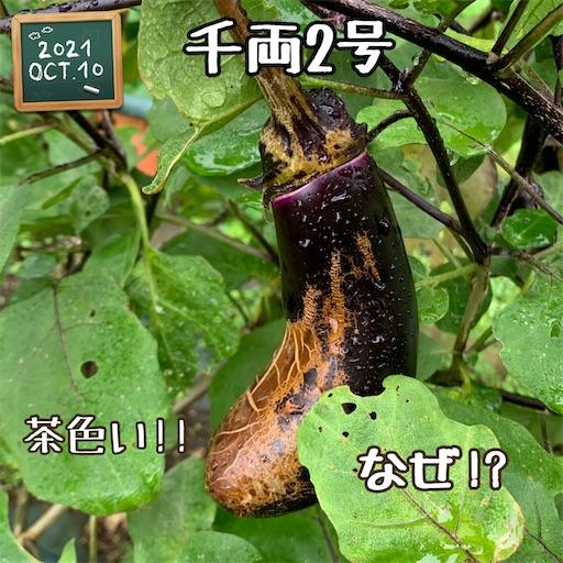 f:id:morinobanana:20211013160205j:image