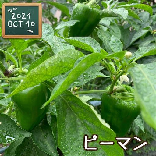 f:id:morinobanana:20211013160231j:image