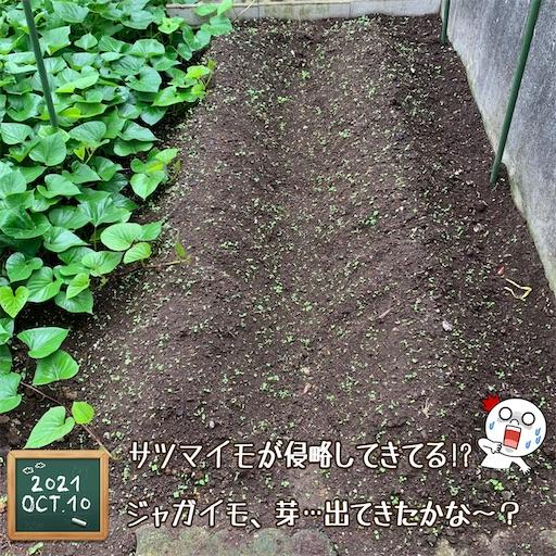 f:id:morinobanana:20211013160413j:image