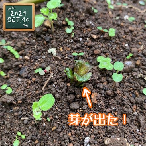 f:id:morinobanana:20211013160438j:image