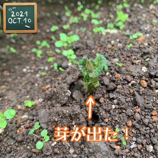 f:id:morinobanana:20211013160440j:image