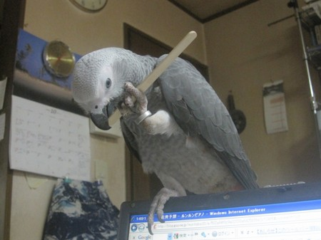 f:id:morinobu2007:20091026124700j:image