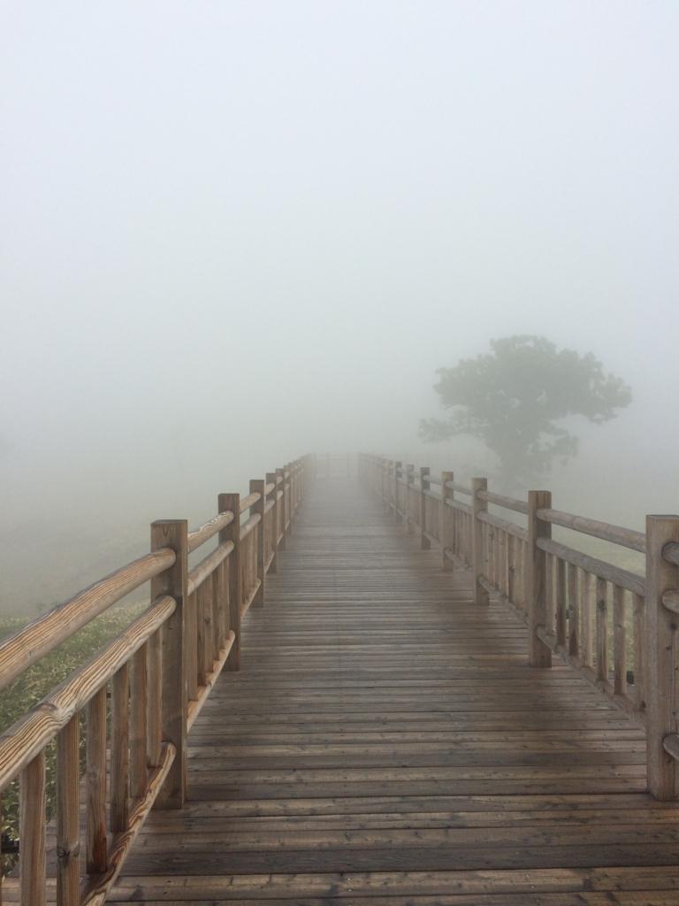 北海道・知床五湖の高架木道