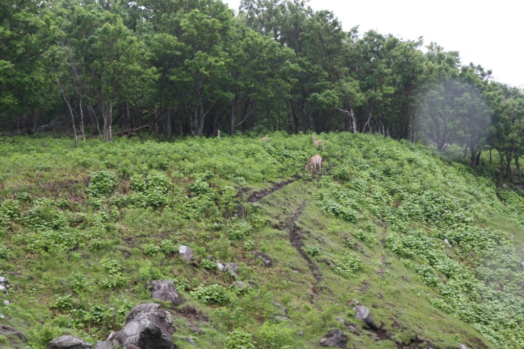 北海道・知床の原生林の先にある男の涙