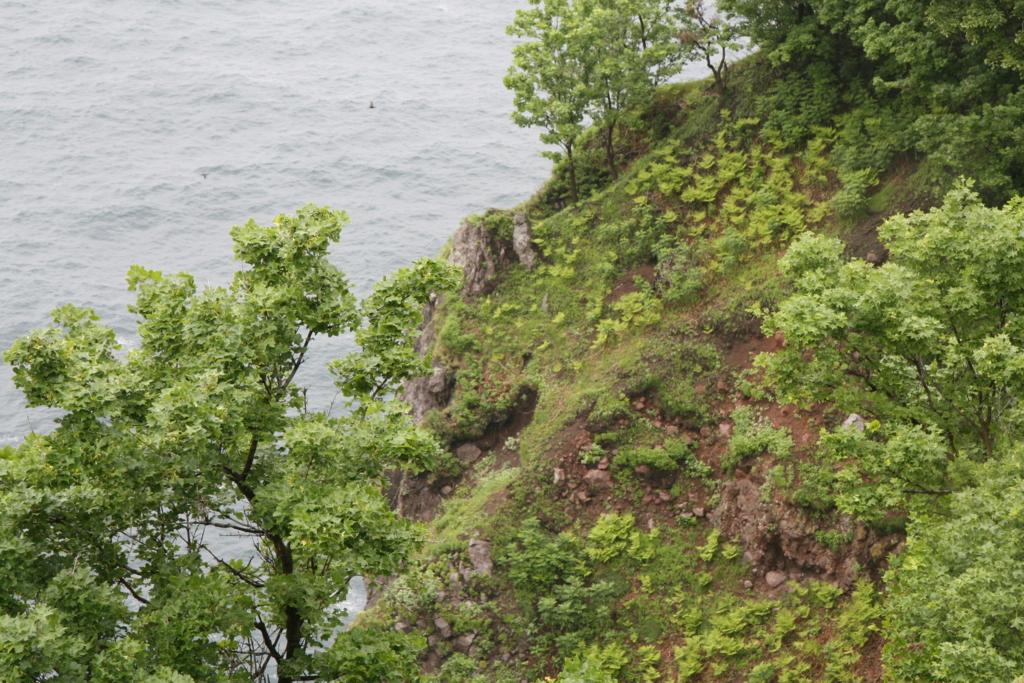 北海道・知床の原生林の先にある男の涙近くの熊の巣