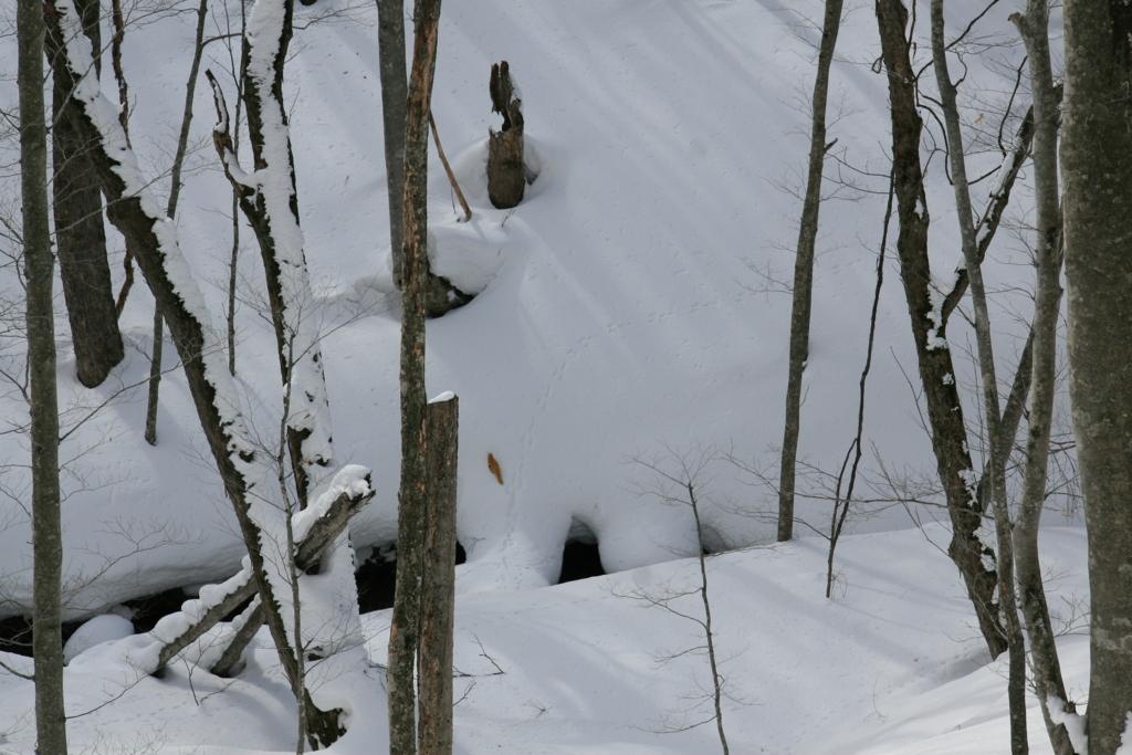 青森・雪が降る蔦の森を歩くスノーランブリング