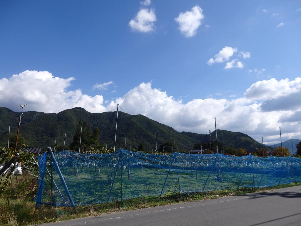 長野・小布施のぶどう畑
