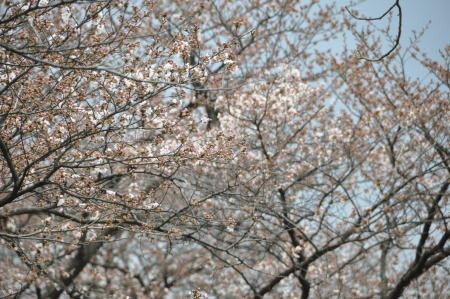 f:id:morinui:20080328155857j:image