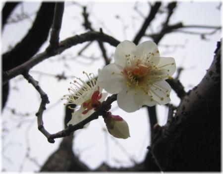 f:id:morinui:20090201233507j:image