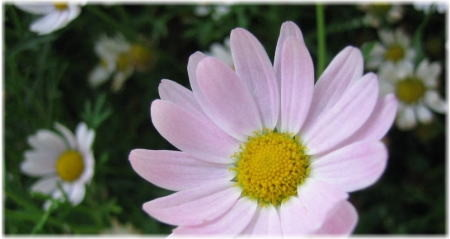 f:id:morinui:20101006201218j:image