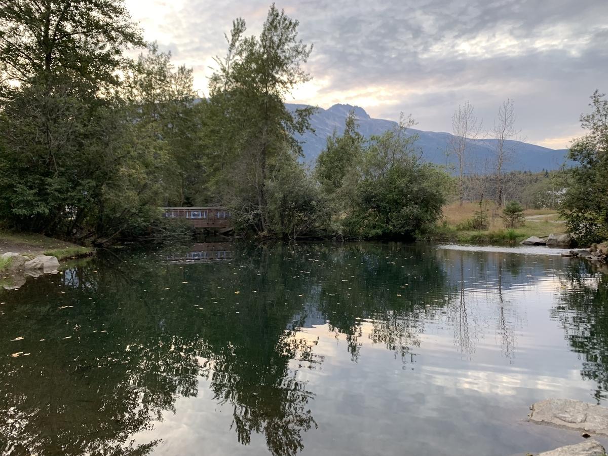 池に反射する風景