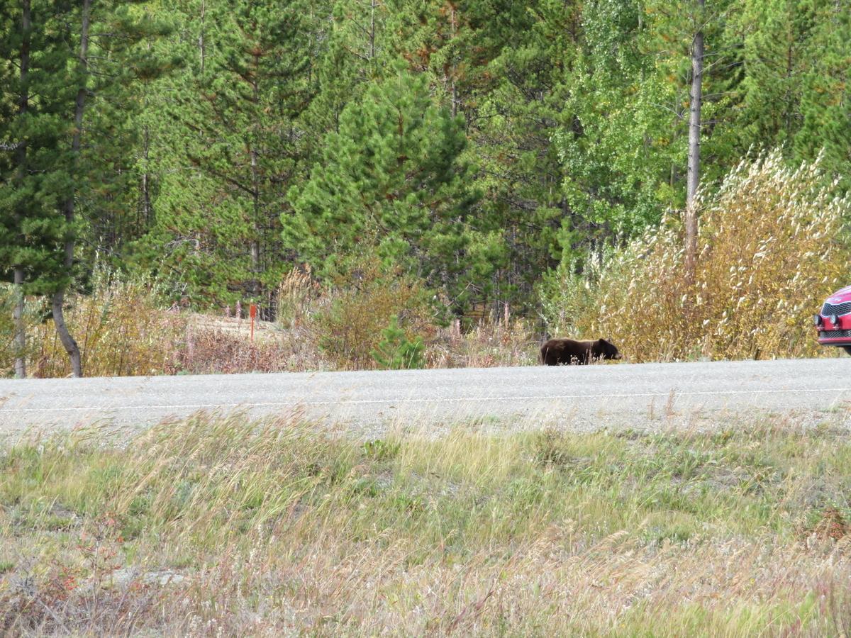 道路に出たクマ