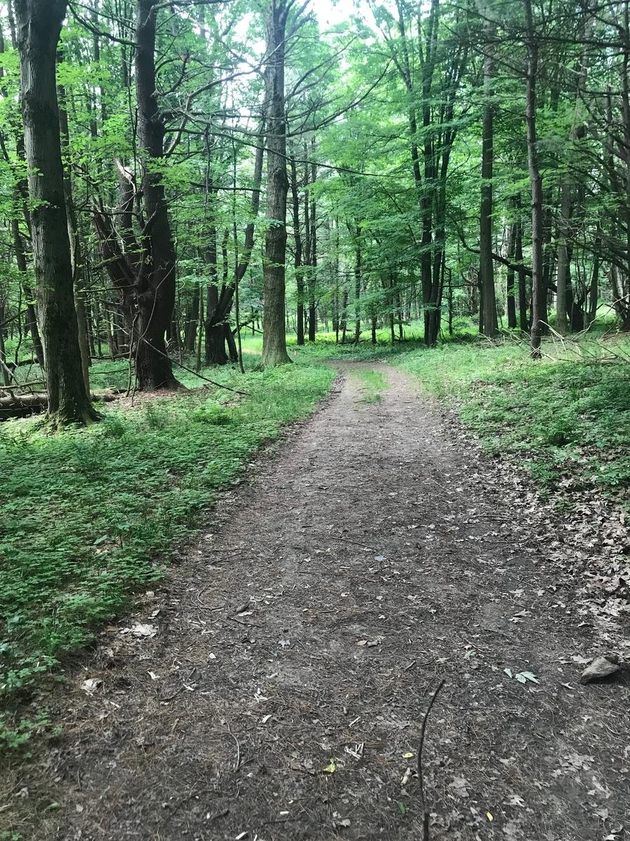 森の中のトレイル