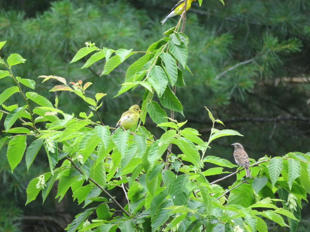 木に止まる小鳥