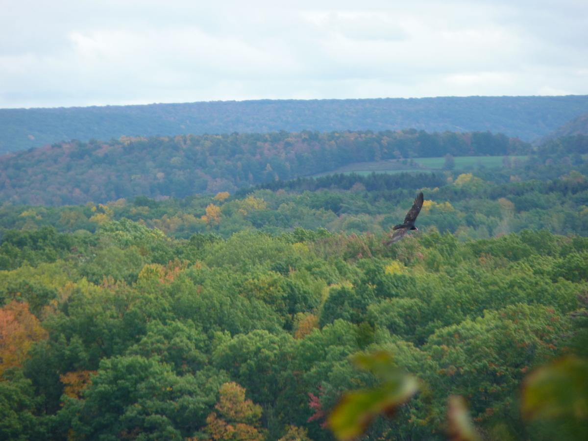 渓谷を飛ぶコンドル