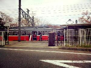 電車越しに桜