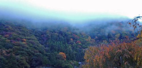 朝霧の景色
