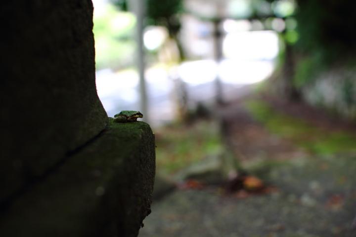 静岡県函南町 春日神社 かえるがいた。