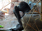 上野動物園 ローランドゴリラ