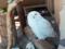 上野動物園 シロフクロウ ウィンクしてる?