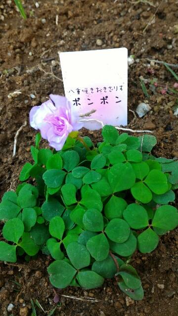 f:id:motherhiromi:20161208061317j:image