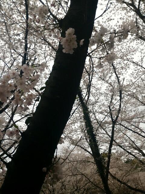 f:id:motherhiromi:20170407123456j:image
