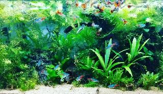 f:id:moti_aquarium:20210119064238j:image