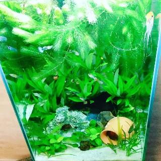 f:id:moti_aquarium:20210121064126j:plain