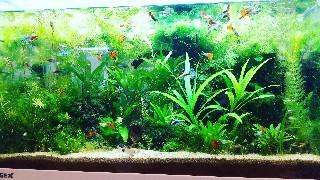f:id:moti_aquarium:20210124070746j:plain