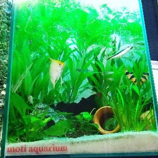 f:id:moti_aquarium:20210125065258j:plain