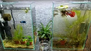 f:id:moti_aquarium:20210128064649j:plain