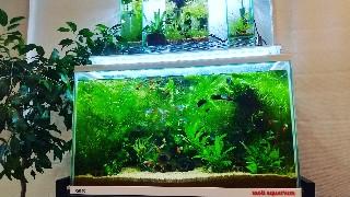 f:id:moti_aquarium:20210211080216j:plain