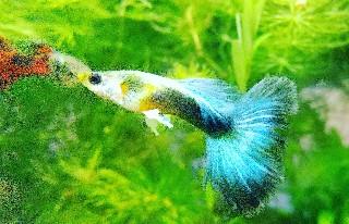 f:id:moti_aquarium:20210217062429j:plain