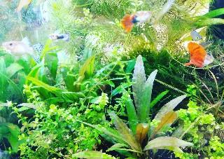 f:id:moti_aquarium:20210222080326j:plain