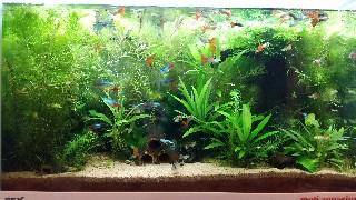 f:id:moti_aquarium:20210226064514j:plain