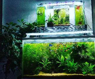 f:id:moti_aquarium:20210301070033j:plain