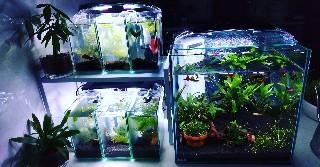 f:id:moti_aquarium:20210313184153j:plain