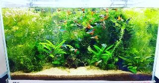 f:id:moti_aquarium:20210315003931j:plain