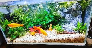 f:id:moti_aquarium:20210319125532j:plain