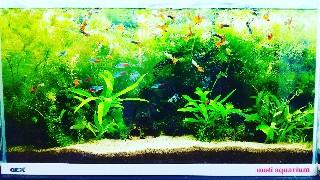 f:id:moti_aquarium:20210322064425j:plain