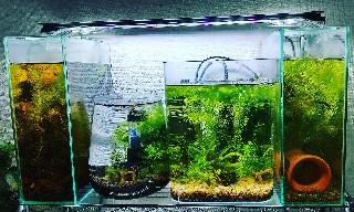 f:id:moti_aquarium:20210329063510j:plain