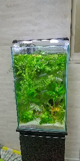 f:id:moti_aquarium:20210401070344j:plain