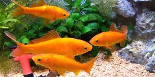 f:id:moti_aquarium:20210403095713j:plain