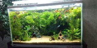 f:id:moti_aquarium:20210405065444j:plain