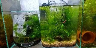 f:id:moti_aquarium:20210406122204j:plain
