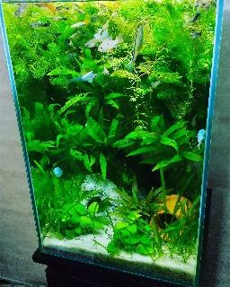 f:id:moti_aquarium:20210410081743j:plain