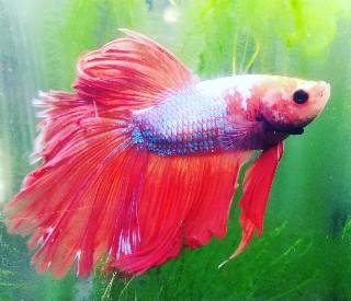 f:id:moti_aquarium:20210412124806j:plain
